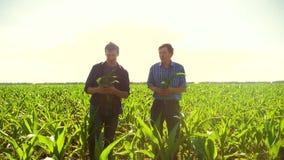 Καλαμπόκι δύο αγρότες που περπατούν μέσω του τομέα του προς τη κάμερα σε αργή κίνηση τηλεοπτική cornfield γεωργία Παλαιός αγρότης απόθεμα βίντεο
