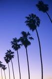 Καλιφόρνια Στοκ Εικόνα