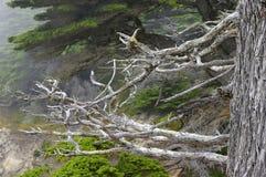 Καλιφόρνια coast4 Στοκ Εικόνες