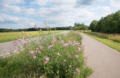 Καλλιέργεια ακρών του δρόμου με malva το alcea και άλλα wildflowers Στοκ Εικόνες