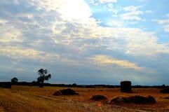Καλλιέργεια επαρχίας στοκ εικόνα