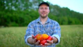 Καλλιέργεια και καλλιέργειες Πορτρέτο του αγρότη ατόμων που παρουσιάζει λαχανικά, ντομάτα, αγορά της Farmer, ντομάτες, οργανική κ απόθεμα βίντεο