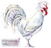 Καλλιέργεια πουλερικών Σειρά φυλών κοτόπουλου εσωτερική απεικόνιση αγροτικών πουλιών διανυσματική απεικόνιση