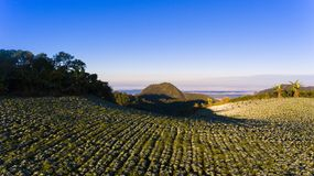 Καλλιέργεια στο λόφο στοκ εικόνες