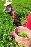 καλλιέργεια του βόρει&omicro στοκ φωτογραφία με δικαίωμα ελεύθερης χρήσης