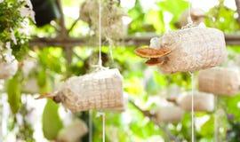 Καλλιέργεια του lucidum Ganoderma Στοκ Εικόνες