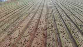Καλλιέργεια των καρότων απόθεμα βίντεο