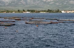 Καλλιέργεια ψαριών στοκ εικόνες