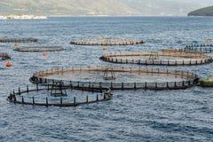 Καλλιέργεια ψαριών στοκ φωτογραφία