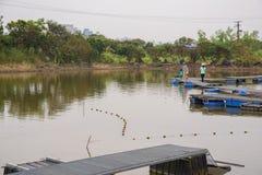 Καλλιέργεια ψαριών στοκ φωτογραφία με δικαίωμα ελεύθερης χρήσης