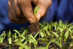 καλλιέργεια Στοκ εικόνες με δικαίωμα ελεύθερης χρήσης