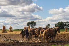 Καλλιέργεια Amish Στοκ Εικόνες