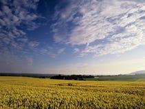 καλλιεργήσιμο έδαφος Στοκ Εικόνες