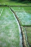 καλλιεργήσιμο έδαφος Στοκ φωτογραφίες με δικαίωμα ελεύθερης χρήσης