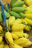 Καλλιεργημένες μπανάνες Στοκ εικόνα με δικαίωμα ελεύθερης χρήσης