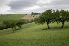 Καλλιεργημένοι τομείς στους λόφους Macerata Στοκ φωτογραφία με δικαίωμα ελεύθερης χρήσης