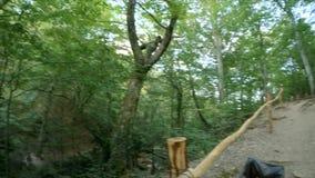 Καλλιεργημένος δρόμος βουνών στο δάσος φιλμ μικρού μήκους