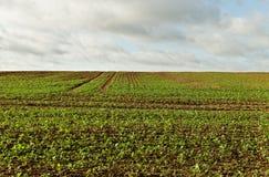 καλλιεργημένος λόφος Στοκ Εικόνα