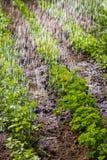 καλλιεργημένο εύφορο πότισμα εδάφους στοκ φωτογραφία με δικαίωμα ελεύθερης χρήσης