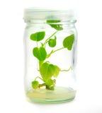 καλλιεργημένο φυτό στοκ φωτογραφία με δικαίωμα ελεύθερης χρήσης