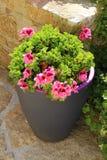 Καλλιεργητής με τα ρόδινα λουλούδια γερανιών στοκ φωτογραφία