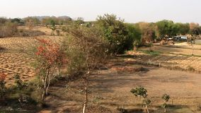 Καλλιεργητική ή crofting γεωργία στην Ινδία απόθεμα βίντεο
