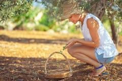 Καλλιεργώντας κορίτσι που παίρνει τα μούρα στοκ φωτογραφία με δικαίωμα ελεύθερης χρήσης