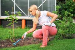 καλλιεργώντας οι νεολ& Στοκ Φωτογραφία