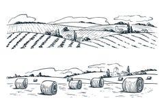 Καλλιεργώντας τοπίο τομέων, διανυσματική απεικόνιση σκίτσων Εκλεκτής ποιότητας υπόβαθρο γεωργίας και συγκομιδής Αγροτική άποψη φύ απεικόνιση αποθεμάτων