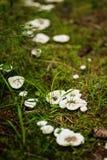 Καλλιτέχνης ` s Conk σε ένα φινλανδικό δάσος Στοκ Εικόνα