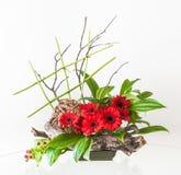 Καλλιτεχνικές ρυθμίσεις λουλουδιών με κόκκινο Gerberas και τις διακοσμητικές ξύλινες ρίζες Στοκ φωτογραφία με δικαίωμα ελεύθερης χρήσης