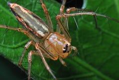 καλλιτεχνική αράχνη Στοκ Εικόνες