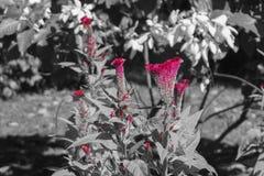Καλλιτεχνική εικόνα λουλουδιών, κόκκινα πέταλα λουλουδιών Στοκ φωτογραφίες με δικαίωμα ελεύθερης χρήσης