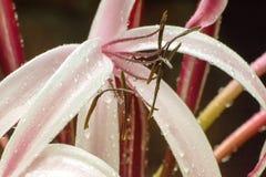 Καλλιτεχνική εικόνα των πτώσεων βροχής στα πέταλα λουλουδιών κρίνων Στοκ Φωτογραφία