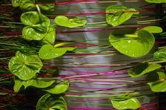 καλλιτεχνικός όμορφος flora Στοκ Εικόνες