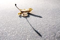 καλλιτεχνικό παγωμένο φύ&lambd στοκ εικόνα με δικαίωμα ελεύθερης χρήσης