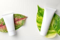 Καλλυντικά εμπορευματοκιβώτια μπουκαλιών με τα πράσινα βοτανικά φύλλα, κενή ετικέτα Στοκ φωτογραφίες με δικαίωμα ελεύθερης χρήσης