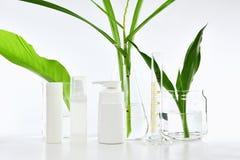 Καλλυντικά εμπορευματοκιβώτια μπουκαλιών με τα πράσινα βοτανικά φύλλα και επιστημονικά γυαλικά, κενή συσκευασία ετικετών για το μ Στοκ Εικόνες