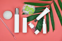 Καλλυντικά εμπορευματοκιβώτια μπουκαλιών με τα πράσινα βοτανικά φύλλα, κενή ετικέτα για το μαρκάρισμα του προτύπου Στοκ εικόνες με δικαίωμα ελεύθερης χρήσης