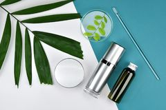 Καλλυντικά εμπορευματοκιβώτια μπουκαλιών με τα πράσινα βοτανικά φύλλα, κενή ετικέτα για το μαρκάρισμα του προτύπου, φυσική έννοια Στοκ εικόνες με δικαίωμα ελεύθερης χρήσης