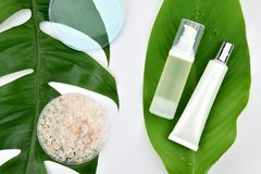 Καλλυντικά εμπορευματοκιβώτια μπουκαλιών με τα πράσινα βοτανικά φύλλα, κενή ετικέτα για το μαρκάρισμα του προτύπου Στοκ Εικόνα