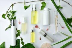 Καλλυντικά εμπορευματοκιβώτια μπουκαλιών με τα πράσινα βοτανικά φύλλα, κενή συσκευασία ετικετών για το μαρκάρισμα του προτύπου Στοκ Εικόνα