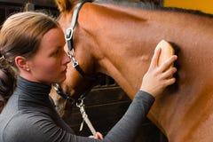 Καλλωπίζοντας άλογο Στοκ Εικόνες