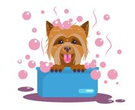Καλλωπισμός σκυλιών Πλύσιμο κουταβιών Αστείο ρύγχος απεικόνιση αποθεμάτων