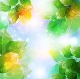 καλοκαίρι άνοιξης λουλουδιών διανυσματική απεικόνιση