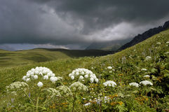 καλοκαίρι βουνών Καύκασ&o Στοκ φωτογραφίες με δικαίωμα ελεύθερης χρήσης