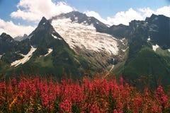καλοκαίρι βουνών λουλ&omi Στοκ εικόνες με δικαίωμα ελεύθερης χρήσης