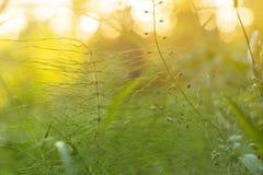 Καλοκαίρι, εγκαταστάσεις χλόης άνοιξης στον ήλιο Θαμπάδα, bokeh, μακροεντολή Στοκ φωτογραφίες με δικαίωμα ελεύθερης χρήσης