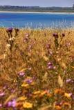 Καλοκαίρι: Επιφύλαξη φύσης Guaceto Torre apulia-Ιταλία Στοκ εικόνες με δικαίωμα ελεύθερης χρήσης
