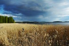 καλοκαίρι θύελλας Στοκ Εικόνες